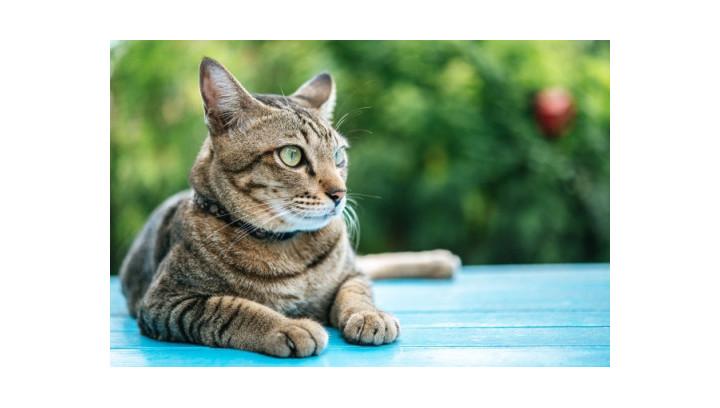 Jaką karmę podawać wysterylizowanym kotom?